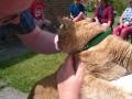 Pet Blessing 13