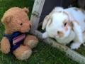 SB rabbit